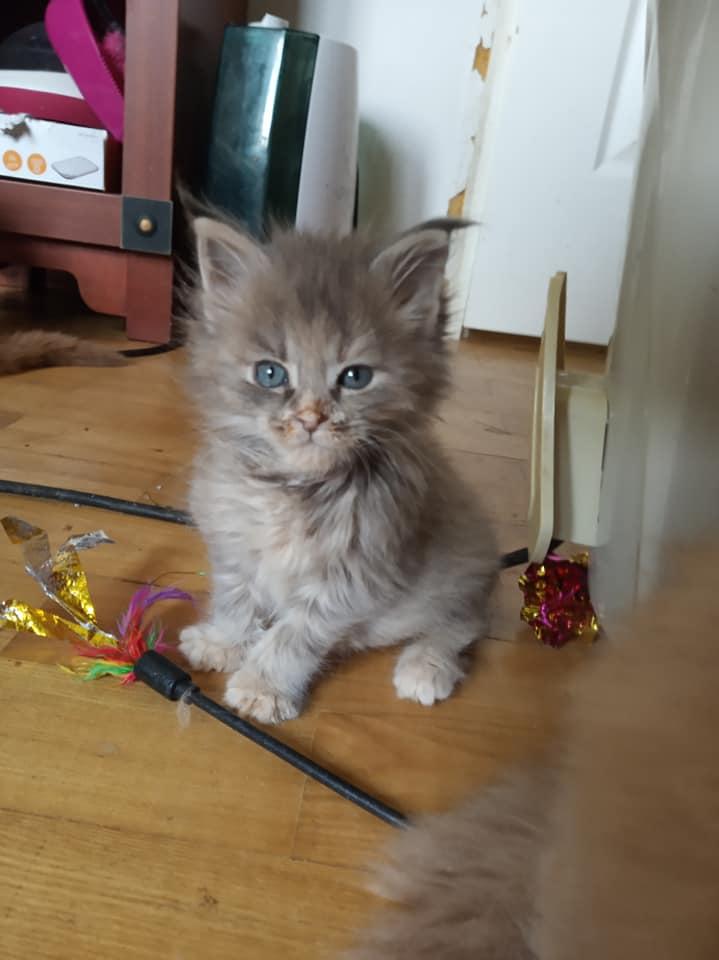 Koteczka Libra Dom Futrzaków*PL