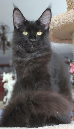 Frowning Gremlin Catsvill County*RU
